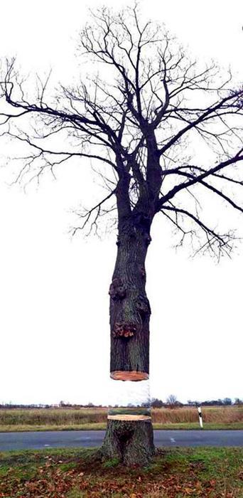 Mario Schyster и его вводящее в заблуждение парящее дерево.