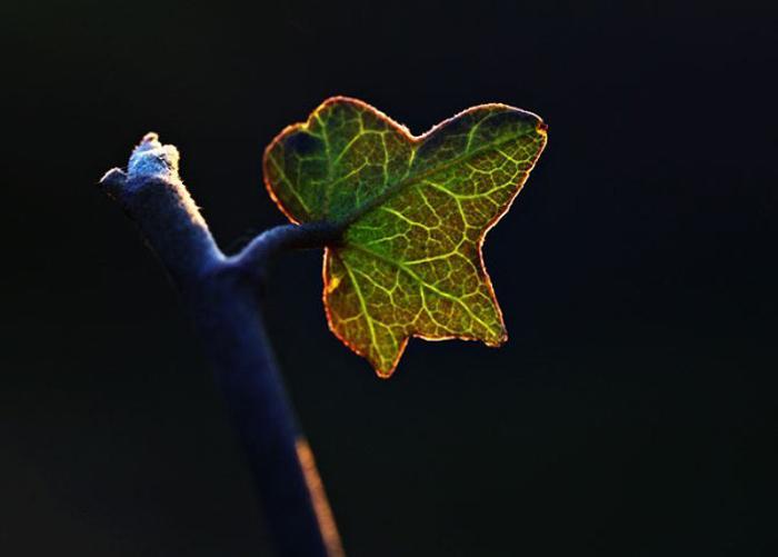 Волшебный листок.