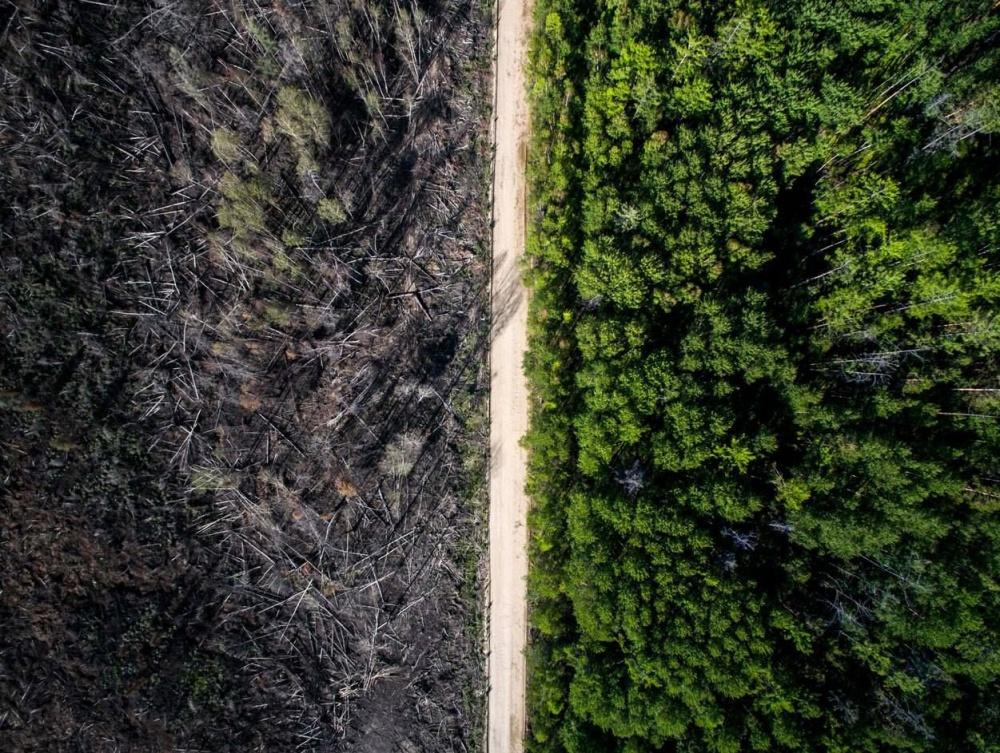 Дорога остановила пожар. Фото: Evgeniy Green