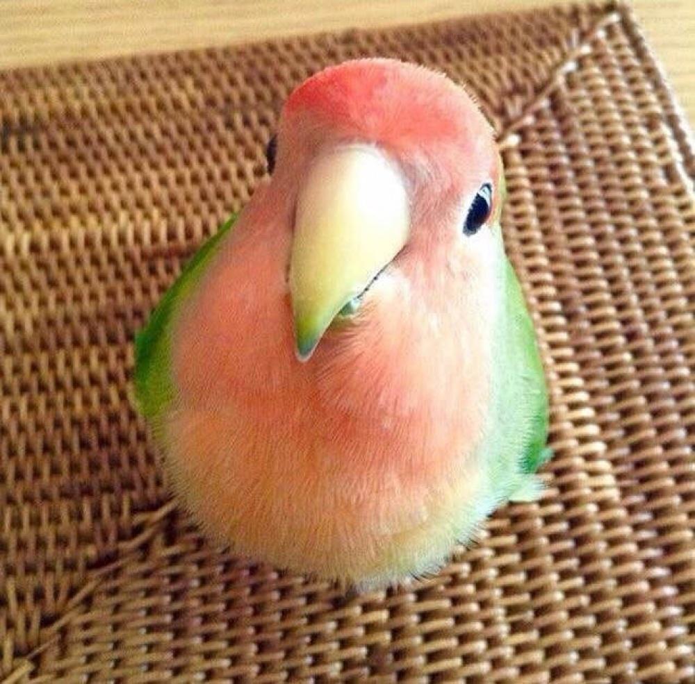 Маленькая птичка очень напоминает по окраске арбуз